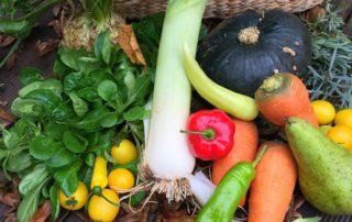 Biogemüse aus der Solodarischen Landwirtschaft