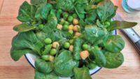 Vegetarischer Low Carb Feldsalat